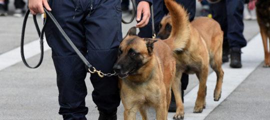 formation maître-chien à Toulouse